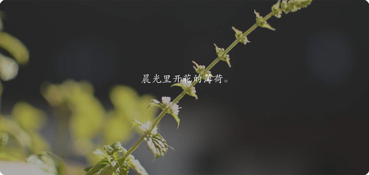 【视频】黑森林的小生活⁴⁷ • 治愈向